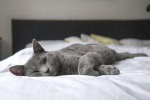 легло и котка