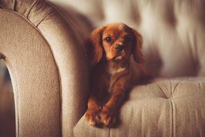 диван и куче
